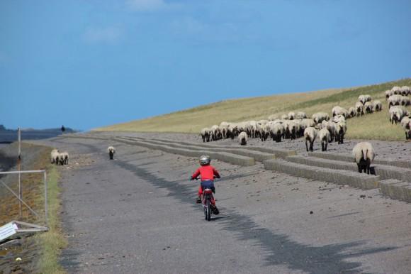 shepherds3